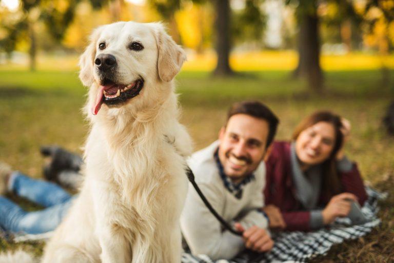 our-cute-dog.jpg