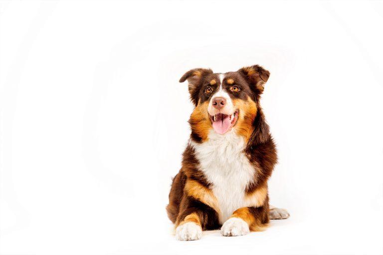 Dog on isolate background